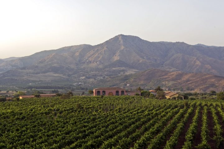 Mount Etna, an active volcano that occasionally erupts, makes northeastern Sicily's wines unique. Offerings from producers in the Etna DOC, like Tenuta delle Terre Nere (vineyards pictured), are surging in popularity at retail locations such as Binny's Beverage Depot in Illinois.