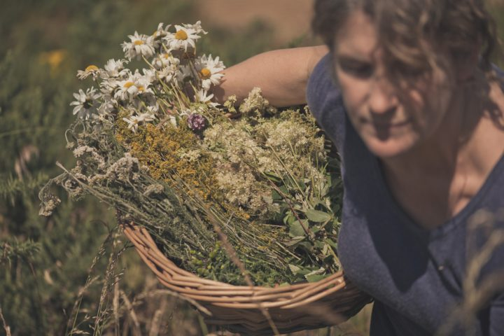 Locally foraged wild botanicals are essential to gin production at Ireland's Glendalough Distillery (forager Geraldine Kavanagh above).