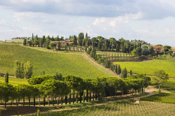 Italian wines are Opici's foundation. The company imports several renowned Italian brands, such as Carpineto (vineyards pictured) from Tuscany. The 2013 Carpineto Vino Nobile di Montepulciano Riserva netted the No.-11 spot on Wine Spectator's Top 100 Wines in 2018.
