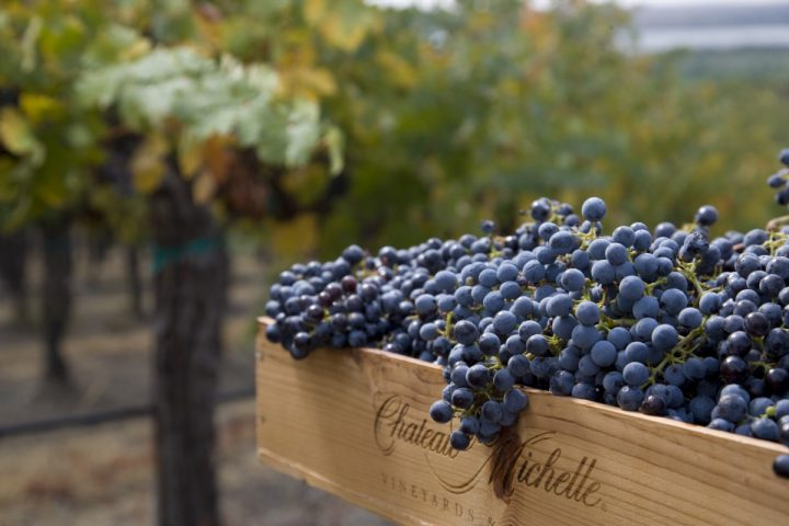 Chateau Ste. Michelle (grape harvest pictured) owns all three of Washington's largest wine brands. The company's eponymous flagship label leads the charge, having depleted 3.28 million cases last year.