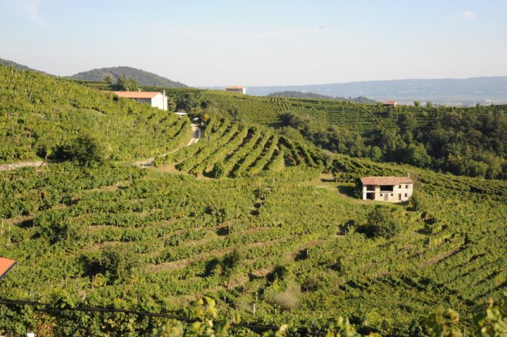 Prosecco's growth is easing as the volume base expands, but Winebow Imports is heavily invested in the category with Zardetto (vineyards pictured).