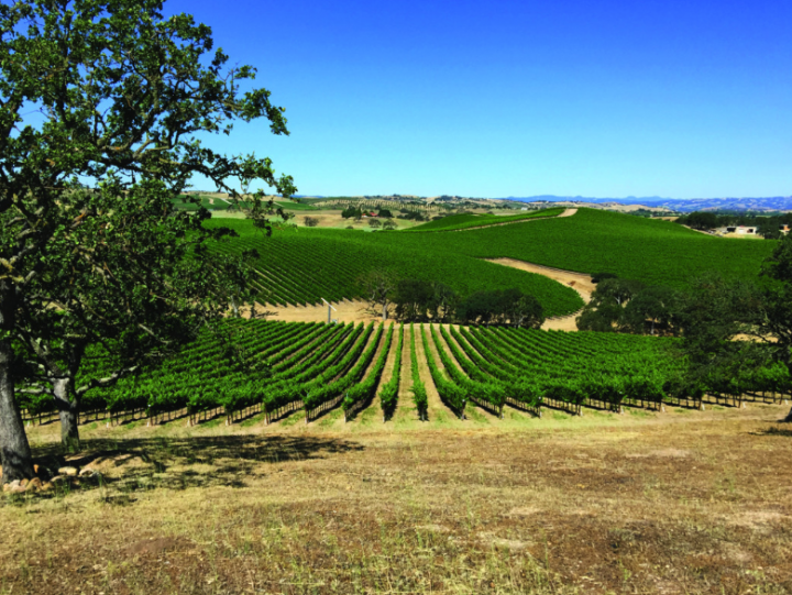 Riboli Family Wine owns around 700 acres of vineyards throughout Paso Robles, with the fruit going toward its San Simeon (vineyards pictured) and Maddalena brands. Fourth-generation family member and winemaker Anthony Riboli sees the most potential for Paso Robles' Cabernet Sauvignon.