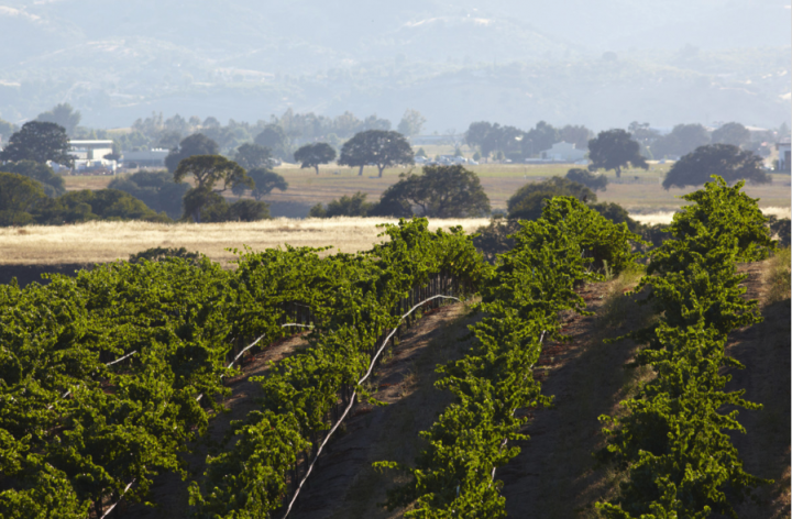 Paso pioneer Eberle Winery (vineyards pictured) has experimented with varietals from all over the world, growing everything from Sangiovese and Barbera to Muscat and Viognier.