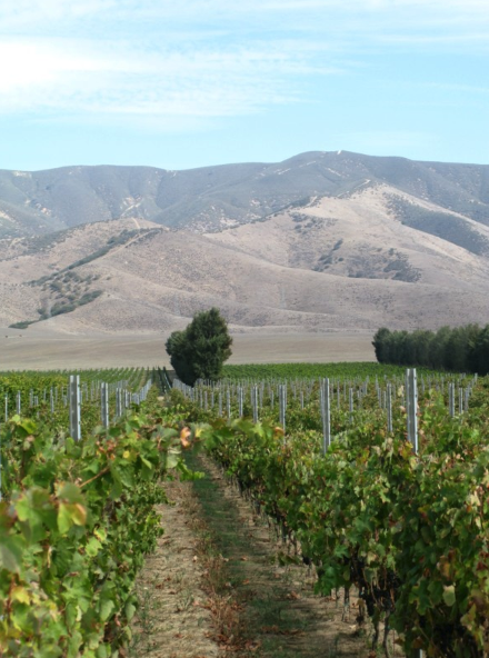 Santa Cruz, California's Bonny Doon (Ca del Solo estate vineyard pictured) was one of Skurnik's first brands.