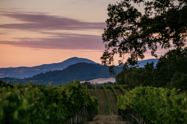 J Vineyards (vineyard pictured) focuses primarily on single-vineyard, estate-grown Pinot Noir, Chardonnay, and sparkling wine from the Russian River Valley AVA. While some of the winery's labels fall at the luxury end, the majority are approachably priced.