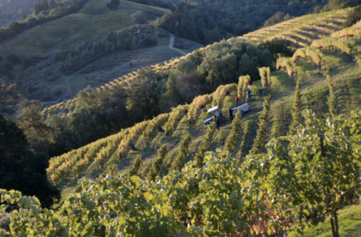 Napa-based Hess Family Wine Estates (Veeder Hills vineyard pictured) is shifting its entire portfolio upstream, focusing now on the super-premium and above. Among the labels driving momentum for the brand's new direction are the Allomi and Lion's Head wines.