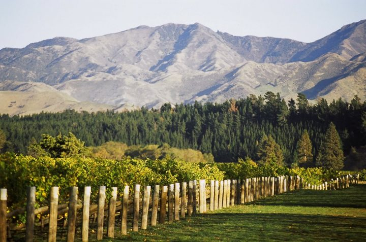 Peter Jackson, chief winemaker at Whitehaven Wines (vineyard pictured) says that New Zealand's micro-climates differentiate the sub-regions, influencing the flavors and textures of the country's wines.