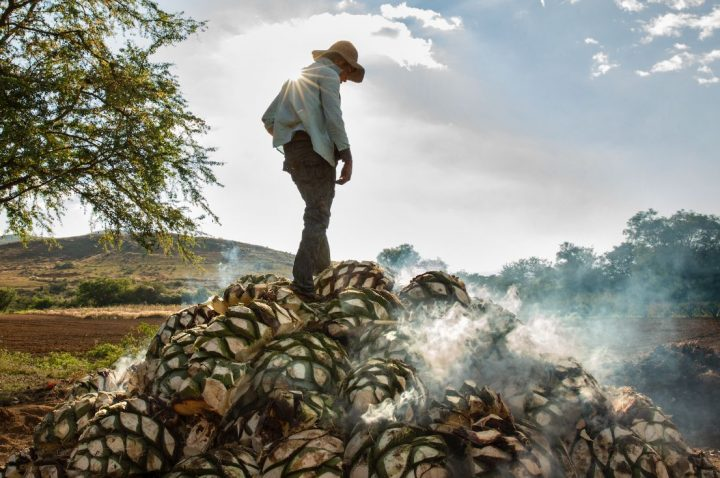 Though still dwarfed by Tequila production, mezcal is raising its profile as Mexico's other agave spirit. Major multinationals have taken stakes in mezcal producers, including Bacardi with Ilegal and Pernod Ricard with Del Maguey Single Village (piña roasting pictured).