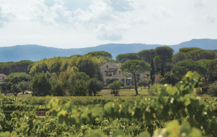 Château Minuty (vineyards pictured) has made strides at rosé's upscale end, as with the release of Château Minuty 281 at $79.