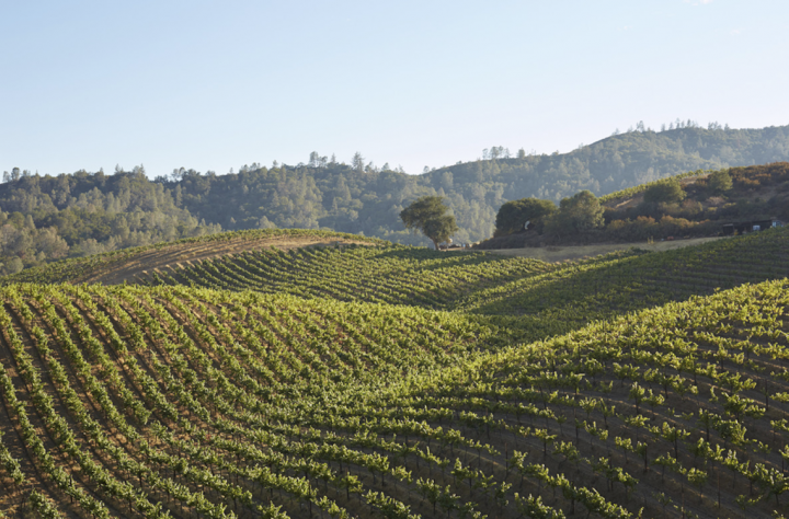 In 2017, Duckhorn Wine Co. acquired Calera Wine Co. (vineyards pictured), a luxury Pinot Noir producer since 1975, in a bid to further establish itself as a leading player in the category.