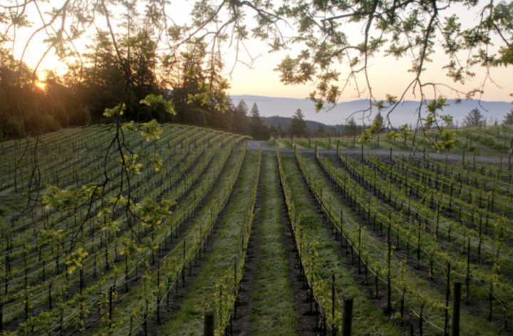 Affordable offerings from the likes of Hess Family Wines (Mt. Veeder vineyards pictured) help the California Pinot Noir space continue to see success.