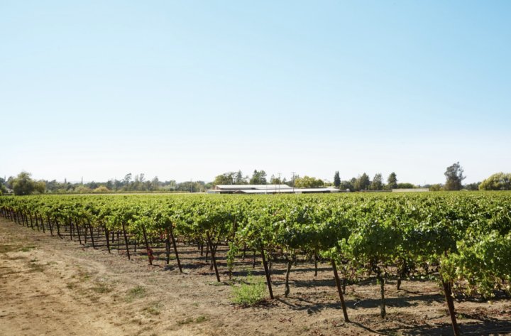 Napa Valley Cabernet Sauvignon (Copper Cane's Napa-based vineyards pictured) remains deeply popular among California wine consumers.