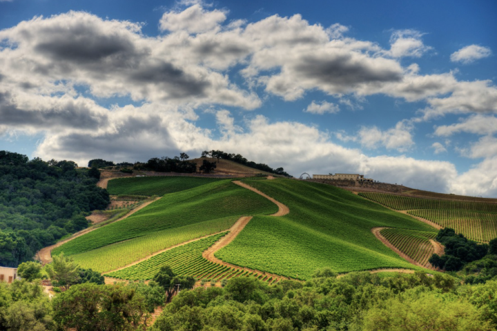 More AVAs have come to the forefront of California's wine industry in recent years, among them Central Coast-based Paso Robles. The region is home to producers like Daou (vineyards pictured), which has made a name for itself through its high-end, Bordeaux-style wines.