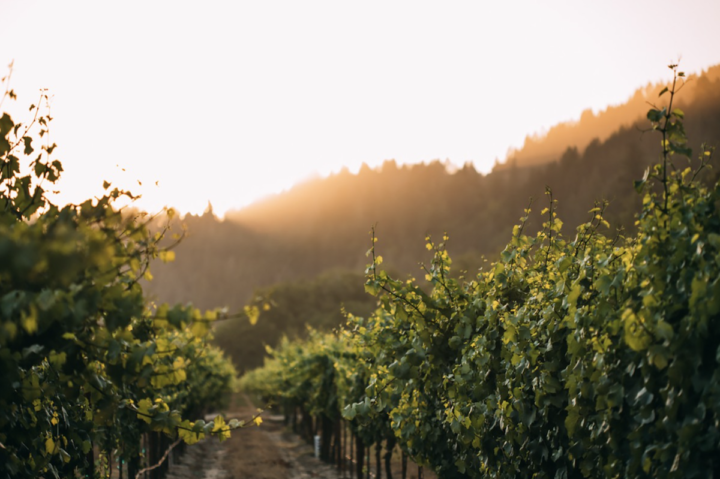 Given the popularity of spiked seltzers and other RTDs, a number of California producers are looking to branch out and innovate with wine-based creations of their own. Trinchero (Bravium vineyards pictured), for example, released Del Mar Wine Seltzer in April.