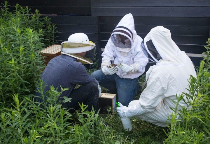 Environmental responsibility is a key value at Copper & Kings. The distillery maintains a butterfly garden planted with milkweed on the premises, as well as beehives (beekeepers pictured), to encourage sustainable pollination.