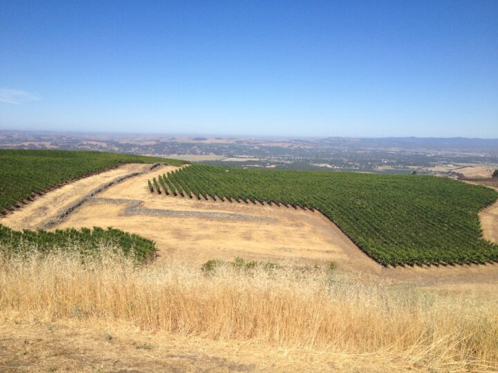 Alex Guarachi is the founder and winemaker of Guarachi Family Wines, which owns properties in both California (Petaluma Gap-based Sun Chase vineyard pictured) and Oregon.