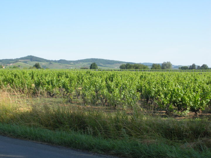 Georges Duboeuf (vineyard in Beaujolais, France pictured) has made gains at retail throughout the Covid-19 pandemic, and expects that success to continue through the winter months.