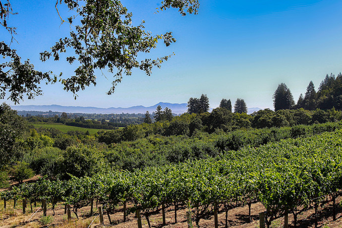Deutsch Family Wine & Spirits sees considerable e-commerce potential for its luxury brands like The Calling (vineyards pictured) as consumers get used to shopping for wine online.