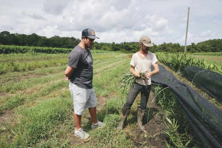 As whisk(e)y drinkers look for new flavors, innovation and experimentation are rising, especially among craft brands like South Carolina-based Virgil Kane Lowcountry Whiskey Co. (ginger harvest pictured).