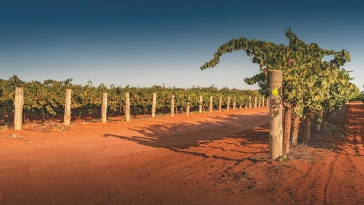 Australian wine (Ricca Terra vineyard pictured) has leveraged the e-commerce space to connect with U.S. consumers in the past year. On Wine.com, the segment has grown 140% in recent years.