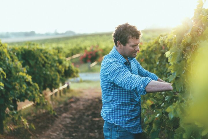 Angove Family Winemakers (co-managing director Richard Angove pictured) partners with Trinchero Family Wines to bring its sustainably produced wines to U.S. consumers.