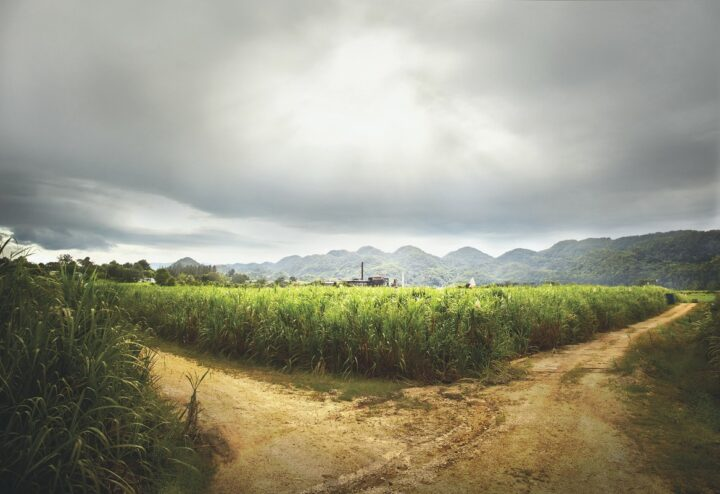 Appleton Estate (estate pictured) grew 11.1% to 250,000 cases in 2020 and aims to attract consumers with new offerings, such as its 8-year-old rum, which the brand introduced last year,