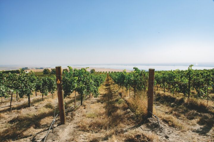 While the biggest Washington wine player declined sharply in 2020, Precept Wine (Canoe Ridge Vineyards pictured), which has three top-ten brands in the category, still saw success as consumers turned to off-premise channels to buy wine during the Covid-19 pandemic.