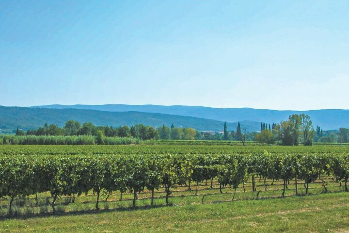 La Vieille Ferme (Luberon vineyard pictured), marketed in the U.S. by Vineyard brands, is the No.-2 French rosé in the U.S. market. The brand increased 25.6% last year, according to Impact Databank, reaching 522,000 cases, just 3,000 cases behind Château d'Esclans.