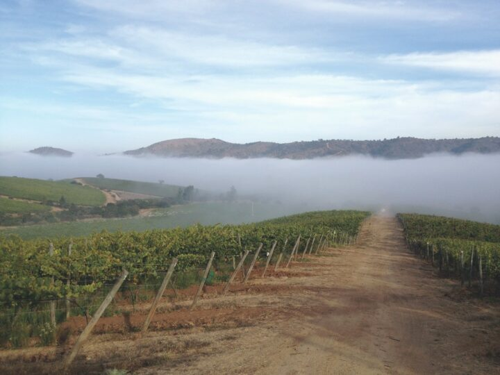 Covid-19 forced many Chilean wine producers and importers (Matetic vineyards pictured) to adjust their strategies.