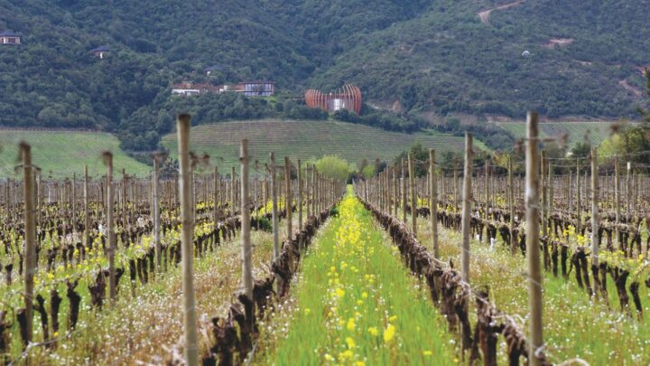 As the world grappled with the Covid-19 pandemic, the Chilean wine category saw mixed results. According to importer Winebow, which handles the Clos Apalta label (winery pictured), brands with an already strong pedigree saw positive results last year.