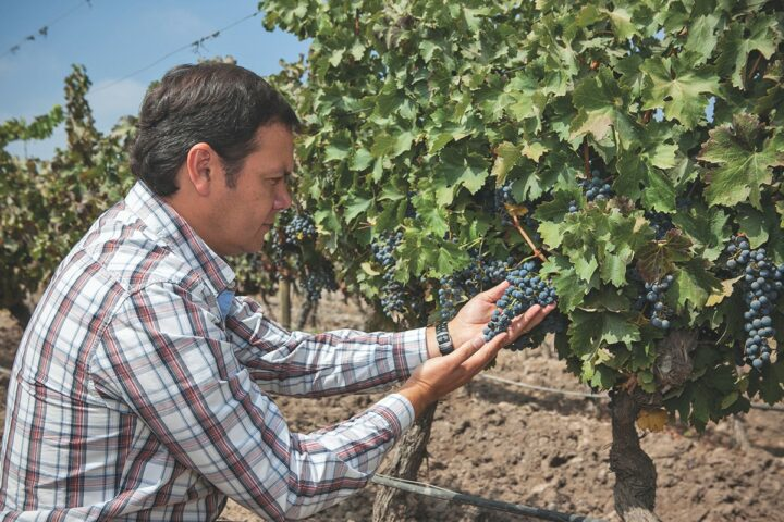 For importers like Pacific Highway Wines, which markets Santa Ema Winery (winemaker Andres Sanhueza pictured), Covid-19 is helping to prove that Chilean wines offer a high quality for a lower price.