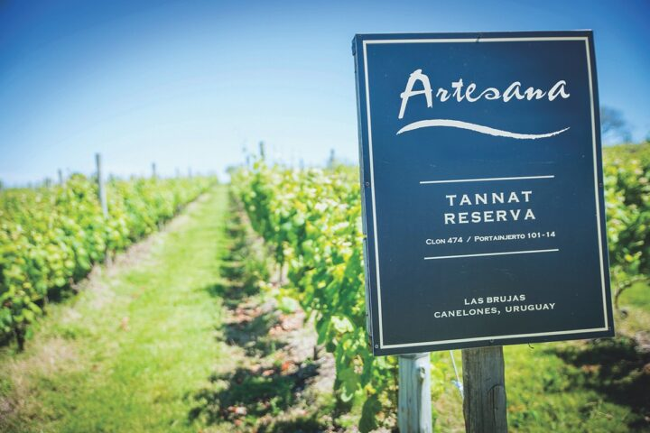 With Bodega Garzón becoming more known, smaller wineries like Artesana (vineyard pictured) are now making inroads.