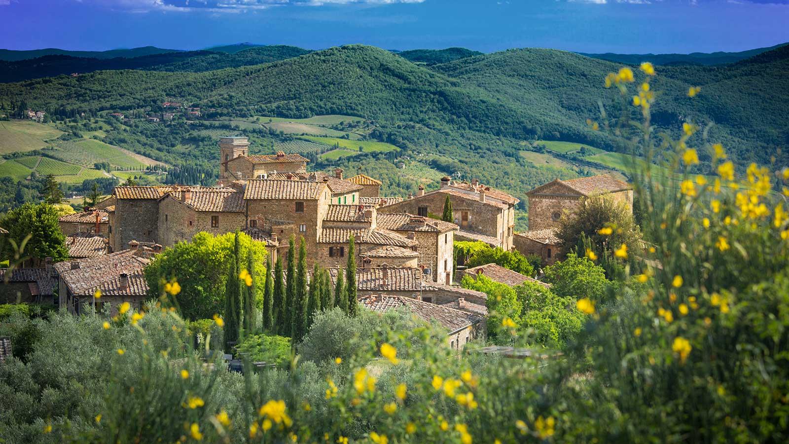 image of vineyard