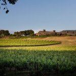 在门多西诺县安德森山谷的Roederer庄园里,种植着几英亩的葡萄树,从酒厂的建筑上可以窥视到一座小山金宝博手机