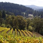 Sloping vine rows in Oregon's Beaux Frères vineyard, with forested hills in the background