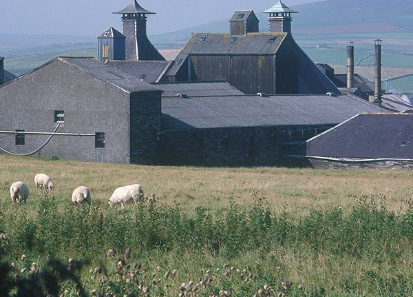 Distillery Tours on Orkney