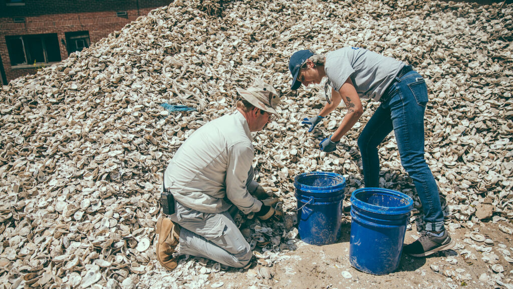 People sort through a very large pile of oyster shells for the New York-based Billion Oyster Project's shell collection program.