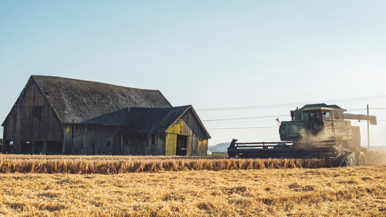 A tractor mows over a field of grain