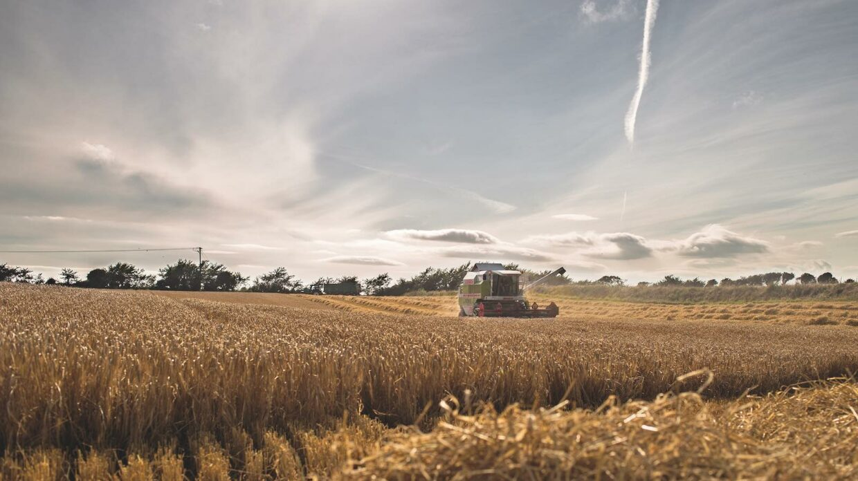a combine harvests barley for Waterford Distillery in Ireland