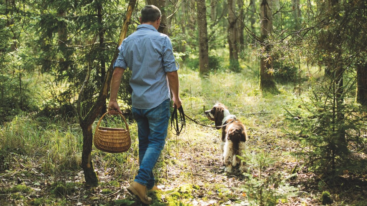 A man and his dog walk in the woods